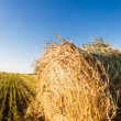 Stock Photo: Haystack in wheat field