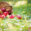 Basket of apples — Stock Photo #10909784