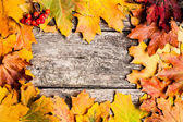Autumn frame with ashberry — Stockfoto