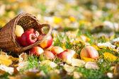 корзина полна красные яблоки — Стоковое фото