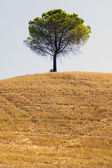 Tree in the countryside of Apulia — Stock Photo