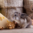 Stock Photo: Rodent heaven - hamster or mouse in pantry