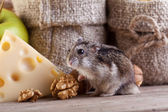 Rodent heaven - hamster or mouse in the pantry — Stock Photo