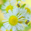 Happy bees on flower background — Stock Photo #11657567