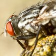 Compound eyes — Stock Photo