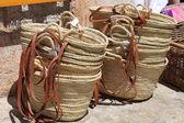 Wattled kabelky — Stock fotografie