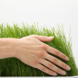 Stock Photo: Hand above green grass