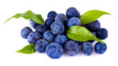 A handful of blueberries — Stock Photo