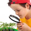 Boy studies young plants — Stock Photo
