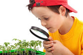 Boy studies young plants — Photo