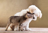 Vrienden - honden- en kattenvoeders samen — Stockfoto