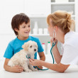 Stock Photo: boy and his fluffy dog at the veterinary checkup