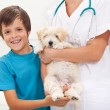 Stock Photo: Boy and his beloved dog at vet