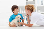 Boy and his fluffy dog at the veterinary checkup — Stok fotoğraf