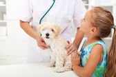 Little girl and her fluffy pet at the vet — Stock Photo