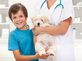Boy and his beloved dog at the vet — Stock Photo
