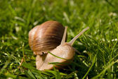Detail of Snail — Stock Photo