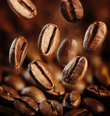 Fall Coffee Bean — Stock Photo
