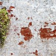 Plant on wall - Stock Photo