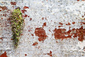 Plant on wall — Stock Photo
