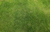 Grass field — Zdjęcie stockowe