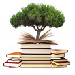 Books with tree — Stock Photo