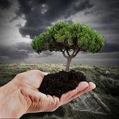 árbol de mano — Foto de Stock