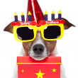Birthday dog — Stock Photo #10928265