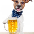 Drunk dog with beer — Stock Photo