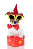 Cachorro de aniversário — Foto Stock