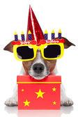 Birthday dog — Stock Photo