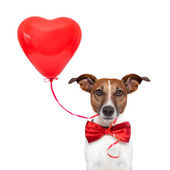 Dog in love — Stock Photo