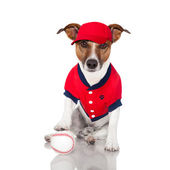 Baseball dog — Stock Photo