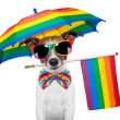 Gay dog — Stock Photo