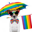 Stock Photo: Gay dog