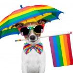 Gay dog — Stock Photo #11377558