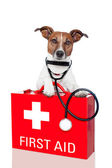 First aid dog — Stock Photo