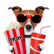 Dog watching a movie - Stock Photo