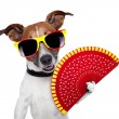 Spanish dog - Stock Photo