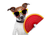 Spanish dog — Stock Photo