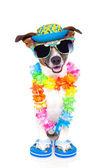 Hond op vakantie — Stockfoto