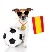 Dog as soccer with spanish flag — Stok fotoğraf