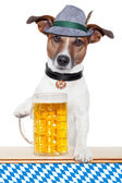 Dog oktoberfest — Stock Photo