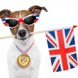 Olympic dog — Stock Photo