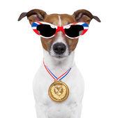 олимпийский собака — Стоковое фото