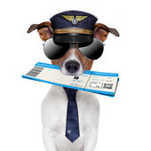 Boarding pass dog — Stock Photo