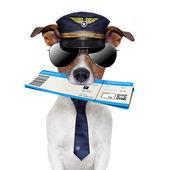Palubní vstupenku pes — Stock fotografie