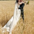 Wedding couple in the field — Stock fotografie