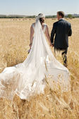 Wedding couple in the field — Stock Photo