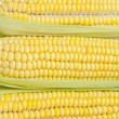 Corn texture — Stock Photo